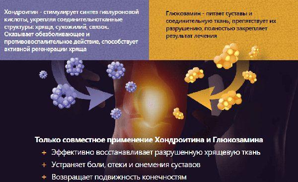 инфографика о составляющих: хондроитин и глюкозамин